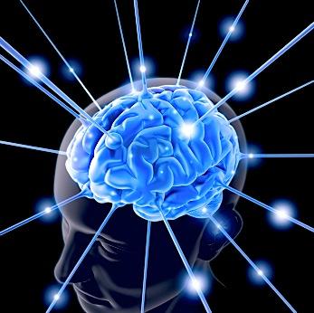 brain-763982-1